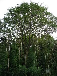 樹木158